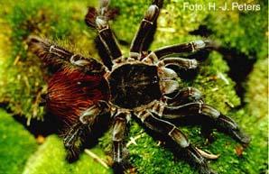 Spidercity
