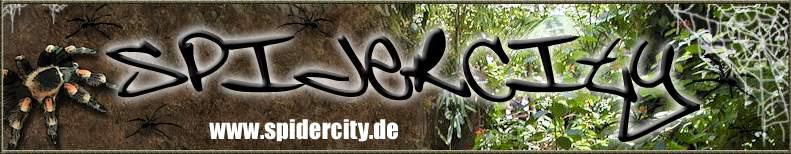 www.spidercity.de